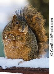 Chubby Squirrel