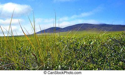 chukotka, sommer, hügel, tundra, natur