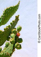 chumbera nopal prickly pear fruits