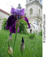 church and flower
