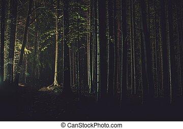 chute de pluie, temps, nuit, forêt