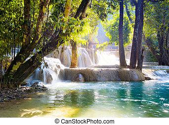 chute eau, dans, forêt
