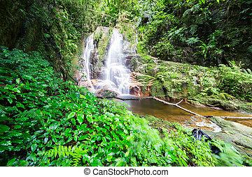 chute eau, dans, forêt tropicale humide