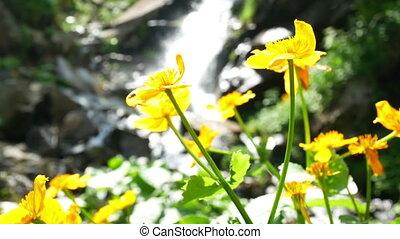 chute eau, fleur, jaune