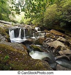 chute eau, forêt dense