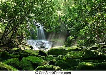 chute eau, forêt, pluie