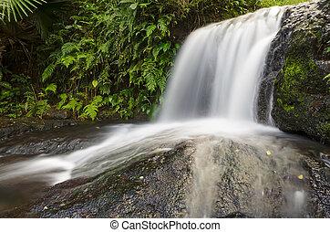 chute eau, naturel, forêt