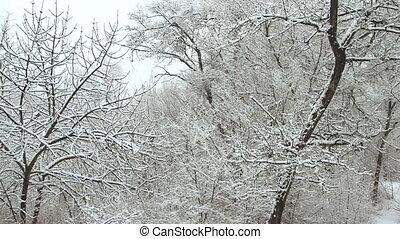 chute neige, dans, a, hiver, parc, à, neige