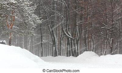 chute neige, dans, hiver, forêt