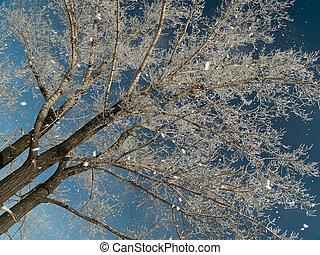 chute neige, et, arbre