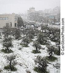 chute neige, sur, olives, et, route