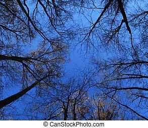chute retard, arbre, sommets