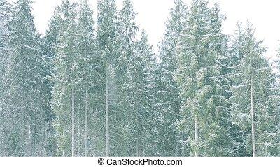 chutes, arbre vert, fond, arbres sapin, neige, majestueux