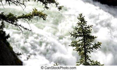 chutes d'eau, arbre, fond, montagnes