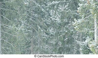 chutes, fond, arbres sapin, neige vert, cadre, remplissage