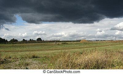 chuva, bezerro, antes de, pastado