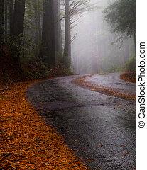 chuvoso, rodovia, em, a, floresta redwood
