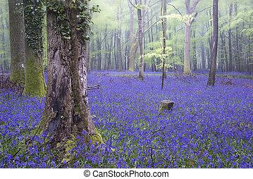 chvějící se, zvonek, koberec, pramen, les, mlhavý, krajina