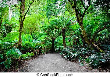 ciągnąć, australia, rainforest, droga, maits, wielki, odpoczynek, ocean