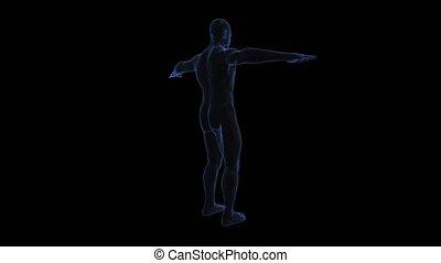 ciało, anatomia, druty, seamless, background.-, obracający, przedstawienie, ludzki, ciemny, pętla, 3d