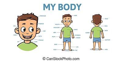 ciało, chłopiec, słownik, body., description., ilustracja, strony, płaski, wektor, horizontal., samiec, rysunek
