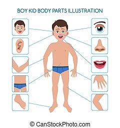 ciało, chłopiec, strony, koźlę