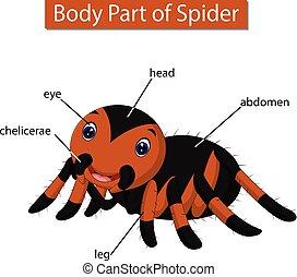 ciało, diagram, pokaz, część, pająk