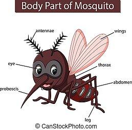 ciało, diagram, pokaz, moskit, część