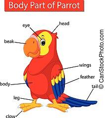 ciało, diagram, pokaz, papuga, część