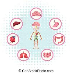 ciało, diagram, różny, strony, pokaz
