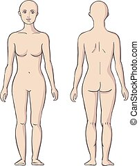 9706876929a2d3 Przód, kobieta nazad. Ciało, kobieta, illustration., piękno ...