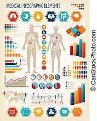 ciało, ludzki, elements., organs., medyczny, wewnętrzny, vector., infographics