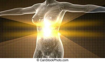 ciało, ludzki, rentgenowski