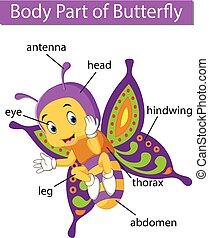 ciało, motyl, pokaz, część, diagram
