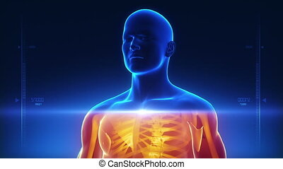 ciało, rentgenowski, skandować, medyczny