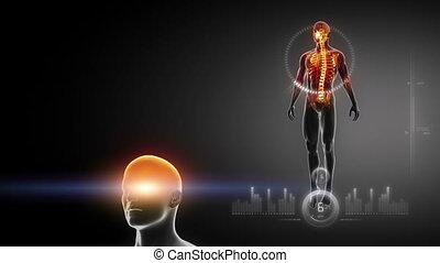 ciało, x, interfejs, medyczny, ludzki