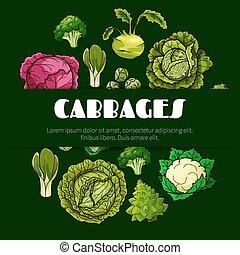 cibo, manifesto, cavolo, verdura, disegno