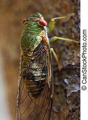 Cicada at waterfall in chiangrai th