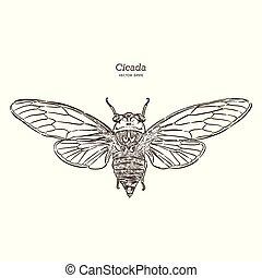 Cicada, hand draw sketch vector.