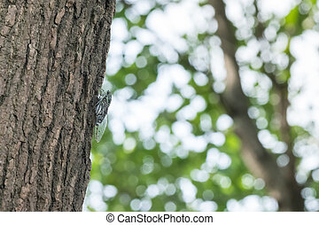cicada holding in the tree