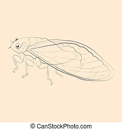 Cicada illustration. Hand drawn isolated sketch. Vector.