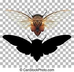 Cicada on transparent background illustration