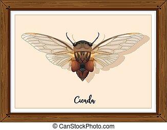 Cicada on wooden frame illustration