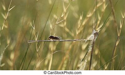 cicada sitting on grass at summer day