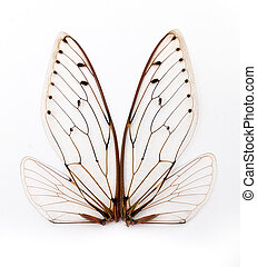 cicada wings.