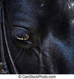 cicatrizarse, de, un, caballo, ojo