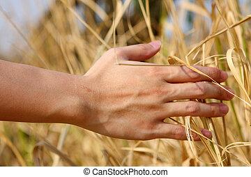 cicatrizarse, de, un, la mano de hombre, conmovedor, el, pasto o césped, 'feeling, naturaleza