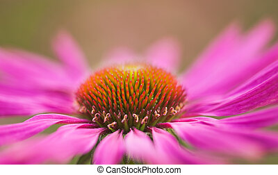 cicatrizarse, flor, para, plano de fondo
