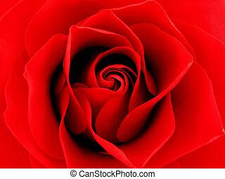 cicatrizarse, rosa roja