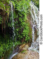 cicatrizarse, verde, plantas, en, el, agua, bajas